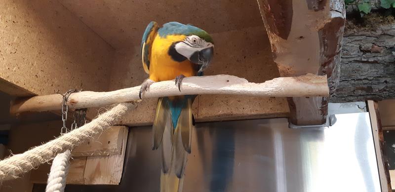 Wizyta Mieszkańców w pobliskiej Papugarni Carmen (4)